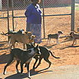 Woman in a swirl of dogs